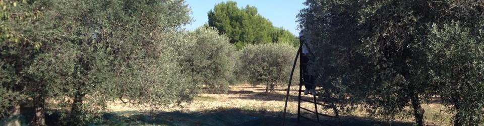 Les élus de Velaux en Avant vous souhaitent de bonnes olivades